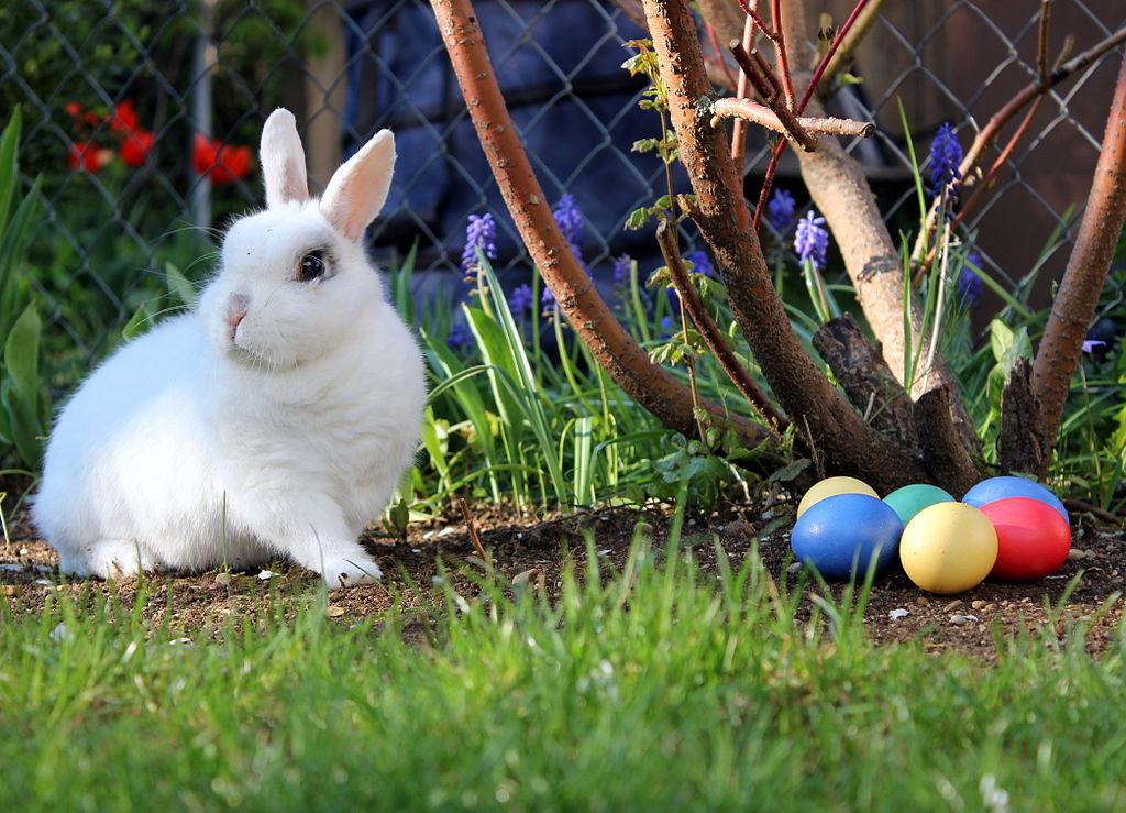 Hvert år har Vitenskolen hos Vitenparken påskeaktiviteter for alle!