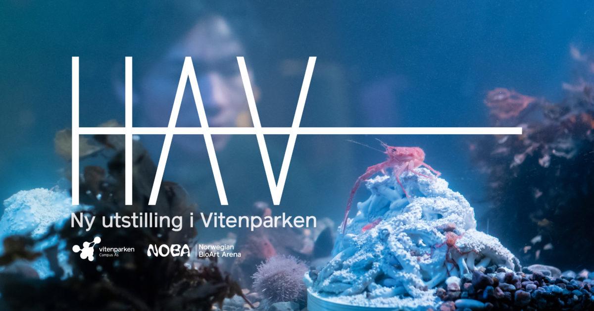 Utstillingen HAV av Elin T. Sørensen